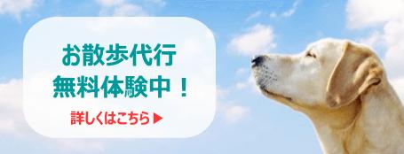 犬の散歩代行無料体験中!