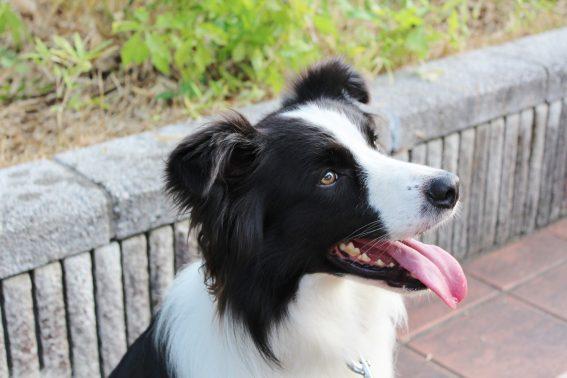笑顔を見せる犬