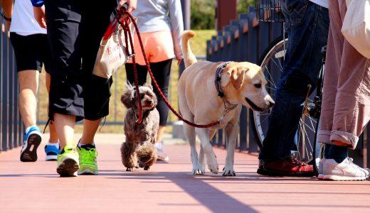 東京で犬のしつけ教室よりも散歩代行をおすすめする7つの理由