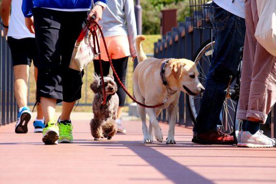 小型犬と大型犬が散歩