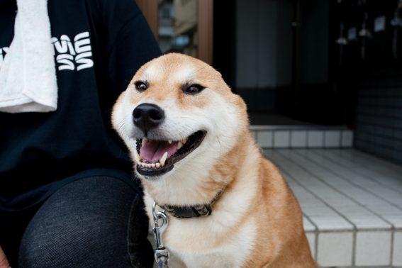 飼い主の横で座る犬