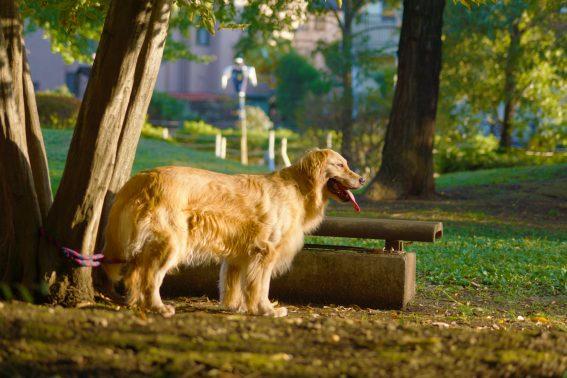 夕日にたそがれる犬