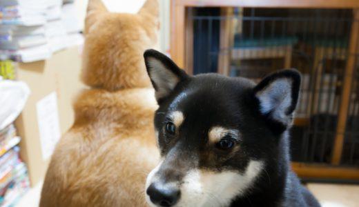 中型犬を安全・快適に室内飼いする3つのポイント|シッターのアドバイス