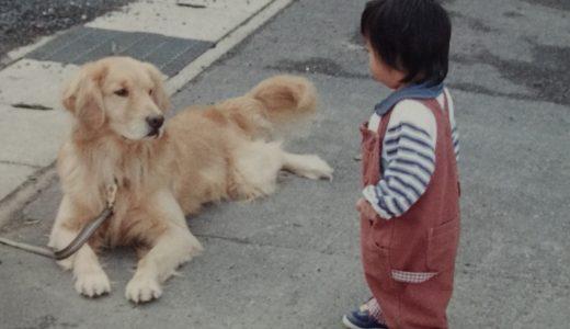 【マンションの方におすすめ】大型犬を満足させる散歩代行とは?