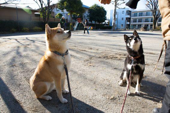 公園でおすわりする犬達