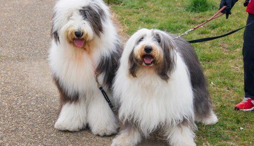 大型犬の多頭飼い|快適な留守番のために飼い主さんができる工夫