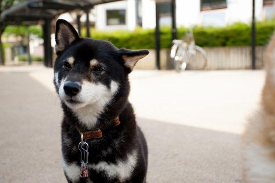 公園でおすわりする犬