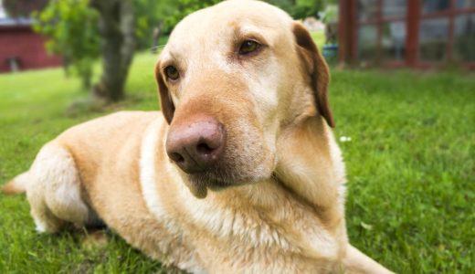 東京で飼い主さんと共に大型犬のお世話、健康管理ができるペットシッター