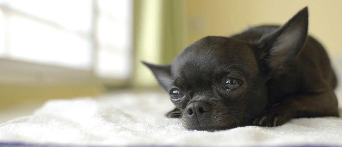 都内の愛犬の運動不足