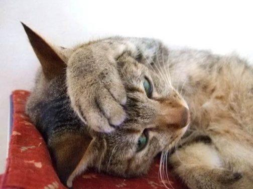 顔に手をかける猫