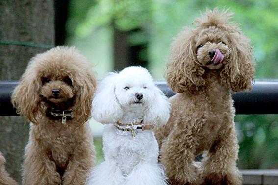 大人しく撮影される犬達