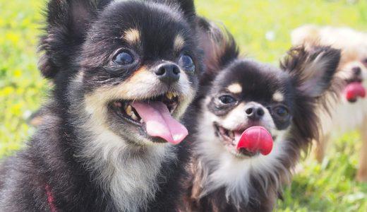 多頭飼いのメリット|飼い主さん&愛犬が得られることは?