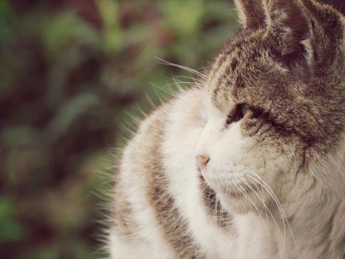 外を見つめる老猫