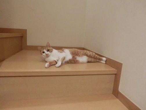 自宅でリラックスする猫