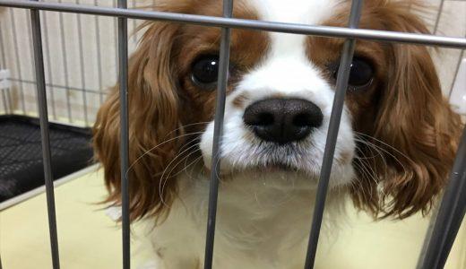 ペットホテルに長期愛犬を預ける|起こり得るケースと気を付けるべき事