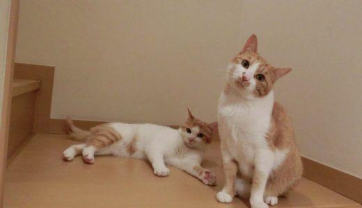 東京で猫の多頭飼いをしている方必見!飼い主の期待に応えるペットシッター