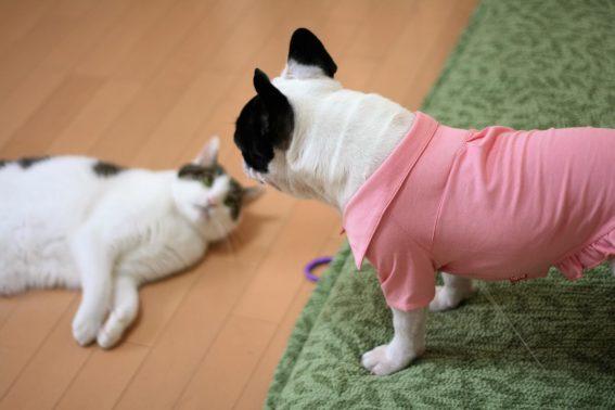 一触即発の犬と猫