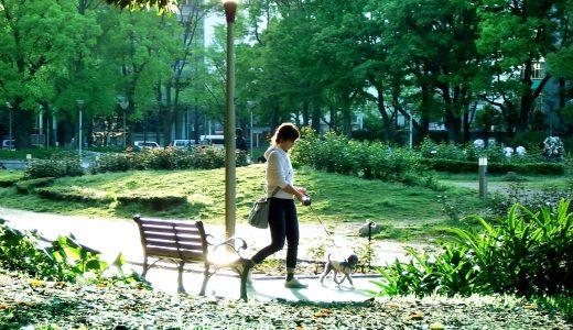 東京でペットシッターのアルバイトをするには?資格取得は本当に必要?
