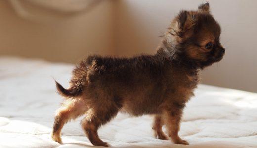 子犬のトイレトレーニングは成功体験の積み重ねが大事!必要な環境作り