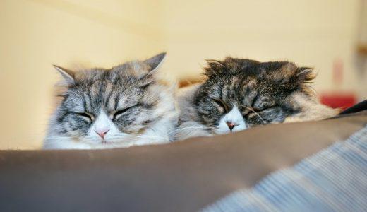 猫の多頭飼いで得られる4つのメリット|飼い主さんも、愛猫も快適に!?
