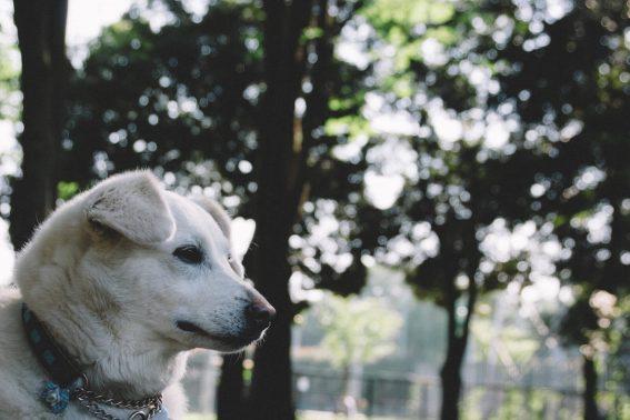 散歩中立ち止まる犬