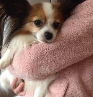 子犬を抱っこする飼い主