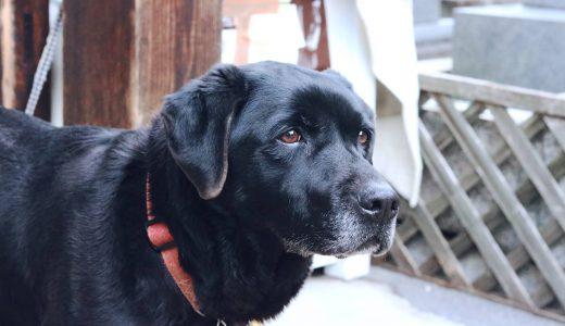 【大型犬の介護】飼い主と愛犬の負担を軽くするポイントと注意点