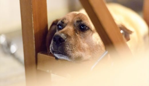 旅行中ペットホテルに長期愛犬を預ける事で起こるストレスとその解決策