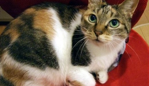 猫をマンションで飼うなら!環境作りで気をつけるべきポイントは?