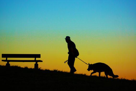 夕暮れに犬と散歩する