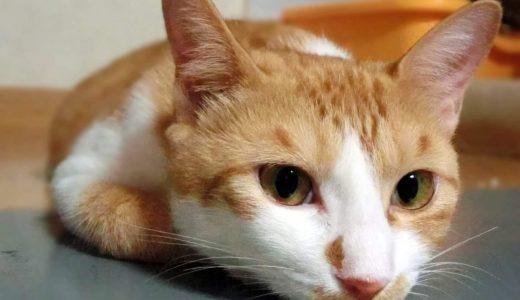 猫が留守番中に感じやすいストレス ~快適に過ごせる6つのポイント~