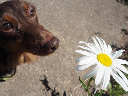 散歩中の愛犬との一コマ