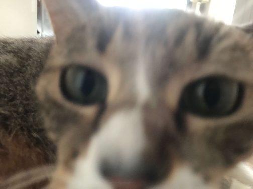 人懐っこい猫
