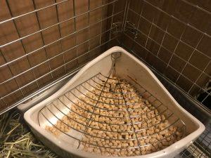 ウサギのトイレ掃除