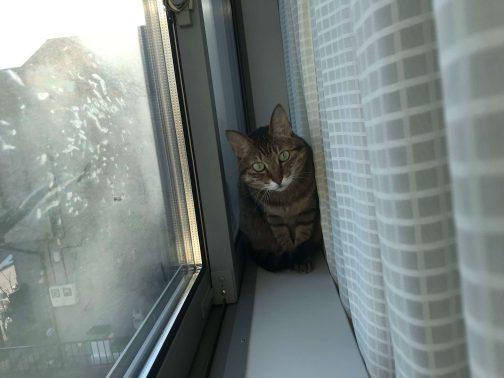 窓際で過ごす様子