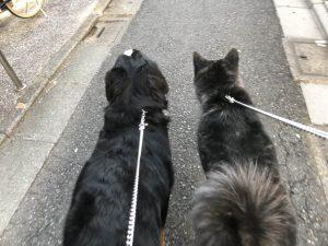 多頭で散歩中の大型犬