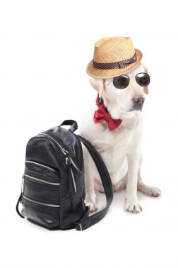 旅行へ行く犬