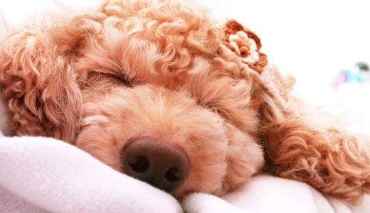 雨の日に最適な犬のマッサージとは?|日々の健康管理のために継続を