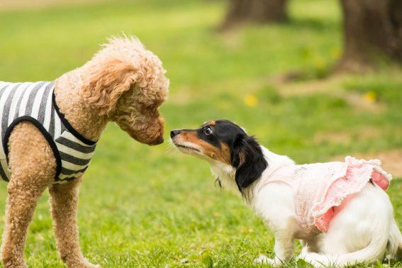 挨拶する犬と犬
