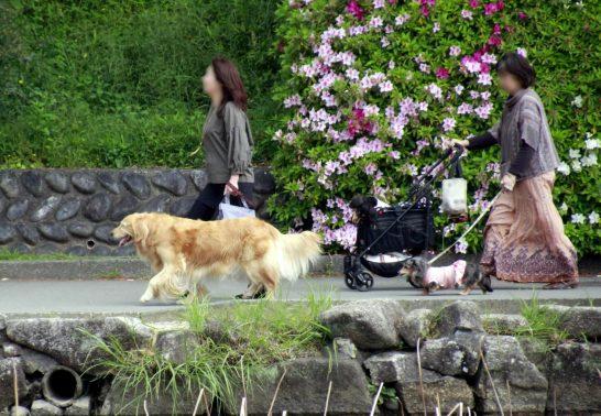 旅行先で散歩する犬達
