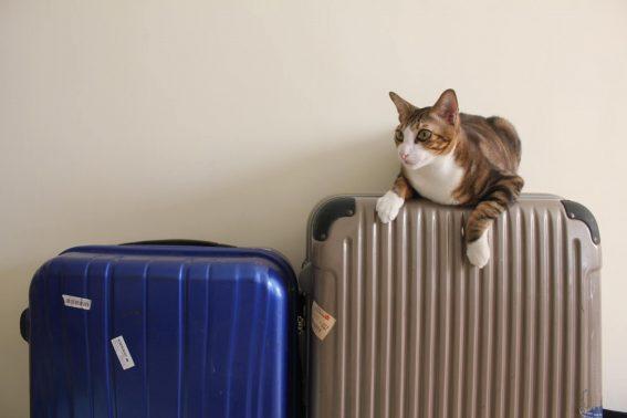 キャリーケースに乗る猫